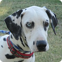 Adopt A Pet :: Chance - Turlock, CA