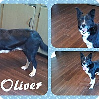Adopt A Pet :: Oliver - DOVER, OH