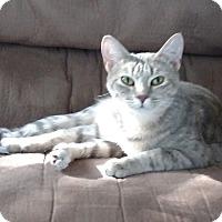 Adopt A Pet :: Holland - St. Louis, MO