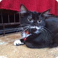 Adopt A Pet :: MOE - Rancho Cucamonga, CA
