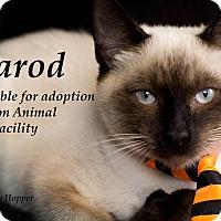 Adopt A Pet :: Jarod - Brockton, MA
