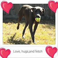 Adopt A Pet :: Olaf-pending adoption - Manchester, CT