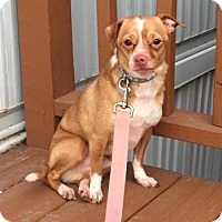 Adopt A Pet :: Porkchop - Round Lake Beach, IL