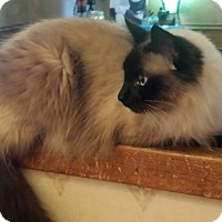 Adopt A Pet :: Xenobia - Ennis, TX