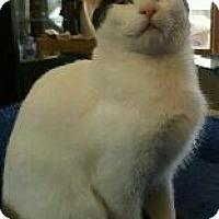 Adopt A Pet :: Delilah - Fenton, MO