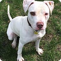 Adopt A Pet :: Sparky - Cleveland, OH