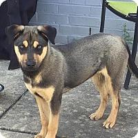 Adopt A Pet :: Mandy - Nashua, NH