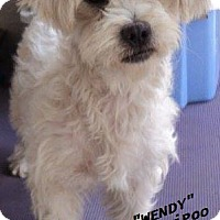 Adopt A Pet :: Wendy - - El Cajon, CA