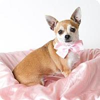 Adopt A Pet :: *JANET - Sacramento, CA