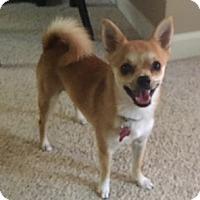 Adopt A Pet :: Exxon - Grafton, WI
