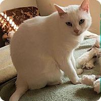 Adopt A Pet :: Tula - Ogden, UT