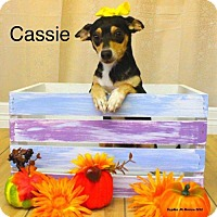 Adopt A Pet :: Cassie - Shreveport, LA