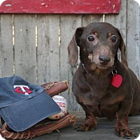 Adopt A Pet :: Bandit - Sioux Falls, SD