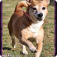 Adopt A Pet :: Pumpkin - Shippenville, PA
