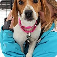 Adopt A Pet :: Katie - Harrison, NY