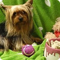Adopt A Pet :: Woodstock - Vacaville, CA