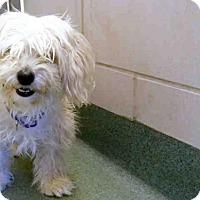 Adopt A Pet :: BELLA - Santa Fe, NM