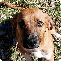 Adopt A Pet :: Sadie - Salem, WV