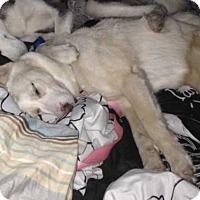 Adopt A Pet :: Mia - San Angelo, TX