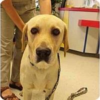 Adopt A Pet :: Cassie - Cumming, GA