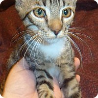Adopt A Pet :: Binks - Porter, TX