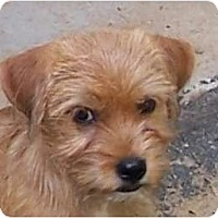 Adopt A Pet :: DOBIE - Plainfield, CT