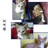 Adopt A Pet :: Max - Bunnell, FL