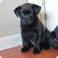 Adopt A Pet :: greg - Cleveland, OH