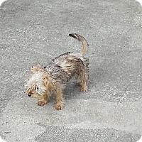 Adopt A Pet :: Dora - Ormond Beach, FL