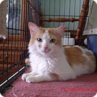 Adopt A Pet :: Lainey - Acme, PA