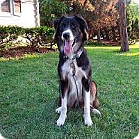 Adopt A Pet :: Mac - Washington, IL