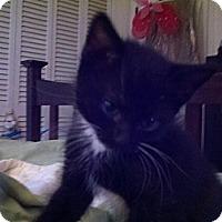 Adopt A Pet :: Margot - Ocala, FL