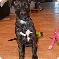 Adopt A Pet :: Coco - West Hills, CA