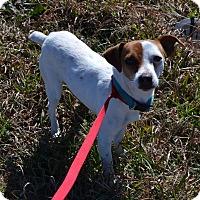 Adopt A Pet :: Ahba in Cleburne, Texas - Austin, TX