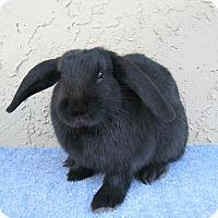 Adopt A Pet :: Winston - Bonita, CA