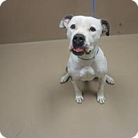 Adopt A Pet :: LUNA - Reno, NV
