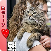 Adopt A Pet :: Betty - Albuquerque, NM