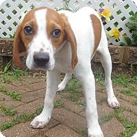 Adopt A Pet :: Wilkie - West Chicago, IL