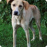 Adopt A Pet :: Sasha - Westport, CT