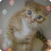 Adopt A Pet :: Aidan - Trevose, PA