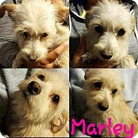 Adopt A Pet :: !  Marley - Colton, CA