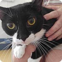 Adopt A Pet :: Spook - Sarasota, FL