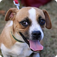 Adopt A Pet :: Peaches - Suwanee, GA