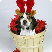 Adopt A Pet :: Chuck - Joliet, IL