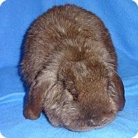 Adopt A Pet :: Conan - Woburn, MA