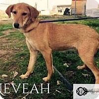 Adopt A Pet :: Neveah - DeForest, WI