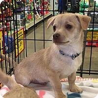 Adopt A Pet :: BRUTUS - Lawton, OK