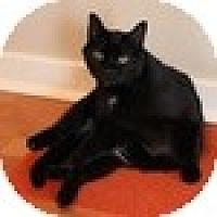 Adopt A Pet :: Cordelia - Vancouver, BC