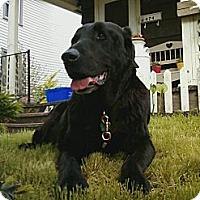 Adopt A Pet :: TOBY (Sr) - Carey, OH