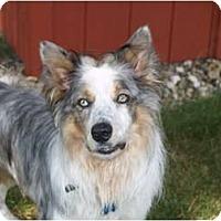 Adopt A Pet :: Jack - Blooming Prairie, MN